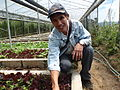 Farmer Romy in his organic LaTop Farm in Benguet, Baguio, Philippines - 2 (10694731925).jpg