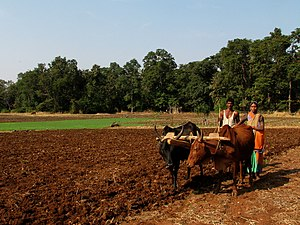 Farmers near Melghat.jpg