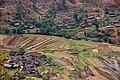 Farming Lijiang.jpg