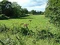 Farmland, New Forest - geograph.org.uk - 37763.jpg