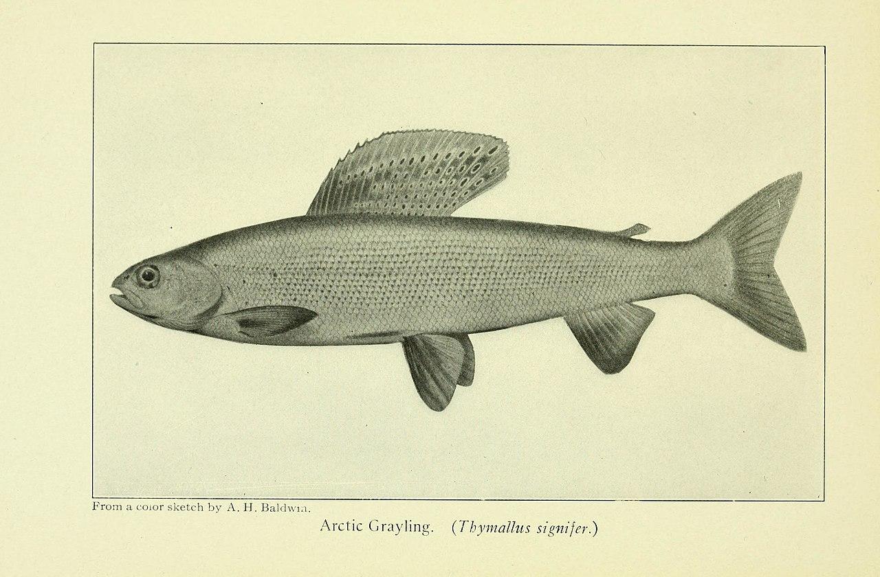 File:Favorite fish and fishing (1908) (14779377071).jpg - Wikimedia ...