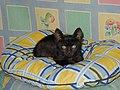 Fekete macska.jpg