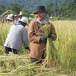 1970s peasant revolts in Thailand - Thai farm workers