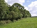 Field boundary near Birchen - geograph.org.uk - 488963.jpg