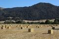Field of hay near Solvang, California LCCN2013632342.tif