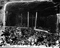 File-A1235-A1239--Taylor, PA--Pyne Mine -1916.08.31- (84843137-0208-4874-9f2d-8dd5895fda00).jpg