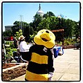 Flickr - USCapitol - Frankie the Bee of the US Forest Service educates about endangered animals and plants at US Botanic Garden..jpg
