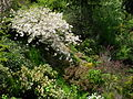 Flickr - brewbooks - Looking down to the woodland - John M's garden.jpg