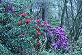 Flickr - brewbooks - Streissguth Gardens - Seattle (1).jpg