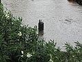 Flood - Via Marina, Reggio Calabria, Italy - 13 October 2010 - (15).jpg