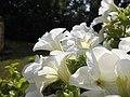 Flor - panoramio (22).jpg