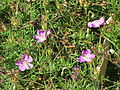 Flores en el Jardín Botánico de Viña del Mar 27.JPG
