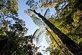 Floresta (paisagem) - Forest Landscape.jpg