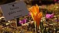 Flower, botanic garden Munich - 2.jpg