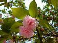 Flower-center135334.jpg
