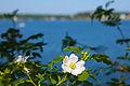 Flower 4220.jpg