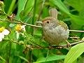 Flower Lover (5538738566).jpg