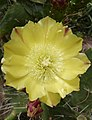 Flower at the Oasis Park - Fuerteventura - 03.jpg
