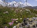 Flowers, Vayots Dzor 08.jpg