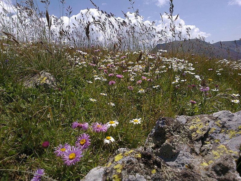 File:Flowers, Vayots Dzor 08.jpg