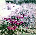 Flowers (3070177131).jpg