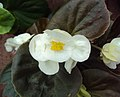 Flowers - Uncategorised Garden plants 61.JPG