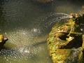Fontana del Drago 13.TIF