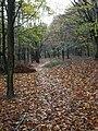 Footpath, Woodnook - geograph.org.uk - 1567588.jpg