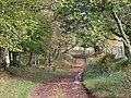 Footpath near Llanfihangel Nant Bran - geograph.org.uk - 1013458.jpg