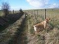 Footpath near Shrewton - geograph.org.uk - 1158757.jpg