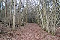Footpath through Little Crabden Wood - geograph.org.uk - 1726794.jpg