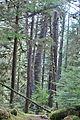 Forest (5738568803).jpg