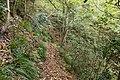 Forest in Mt.Myo 06.jpg