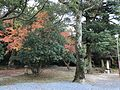 Forest of Sumiyoshi Shrine 4.jpg