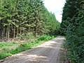 Forest road - geograph.org.uk - 501745.jpg