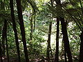 Forest tiritiri matangi.jpg