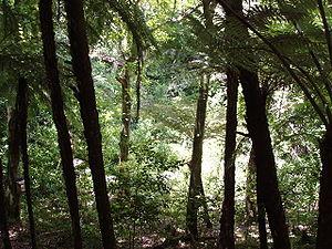 Tiritiri Matangi Island - Forest on Tiritiri Matangi