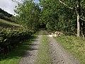 Forest track towards Plas-Rabbit - geograph.org.uk - 257306.jpg