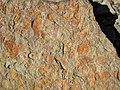 Fossiliferous sandstone (Vinton Member, Logan Formation, Lower Mississippian; Route 16 roadcut northeast of Frazeysburg, Ohio, USA) 5 (25772618597).jpg