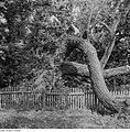 Fotothek df ps 0001138 Bäume.jpg