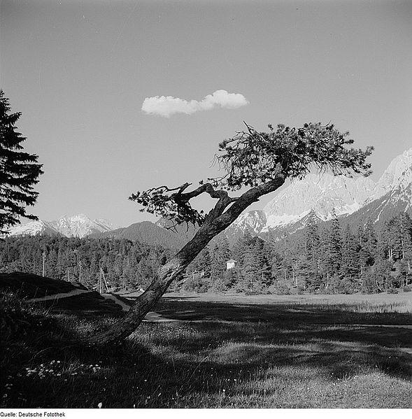 File:Fotothek df ps 0001807 Bäume ^ Landschaften ^ Hügellandschaften - Gebirgslandsch.jpg