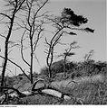 Fotothek df ps 0002068 Landschaften ^ Küstenlandschaften - Boddenlandschaften ^.jpg