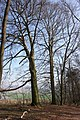 Frühlingsrundwanderung Schmücke bei Heldrungen - panoramio (2).jpg