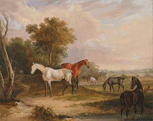 Horses Grazing: a Grey Stallion Grazing with Mares in a Meadow