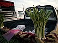 Fresh rhubarb (rewas) for sale in springtime in Ruvia (near Bardarash) 01.jpg