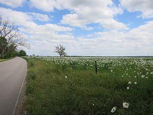 Fulshear, Texas - Image: Fulshear TX Wildflowers