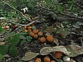 Fungi - panoramio.jpg