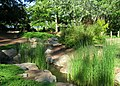 Furman University Japanese Garden - stream 2.JPG