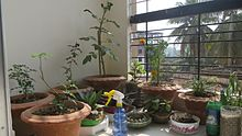 Gardening in restricted spaces wikipedia for Indoor gardening wikipedia