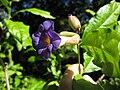 Gardenology.org-IMG 1105 rbgs10dec.jpg